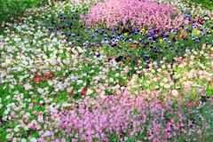 summer flower-bed - stock photo