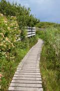 Stock Photo of wooden nature trail path.