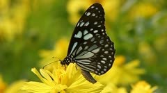 Butterfly Stock Footage