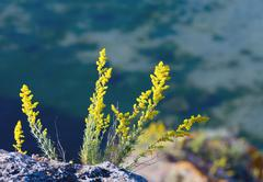 flowers and sea - stock photo