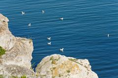 Seagulls and sea Stock Photos