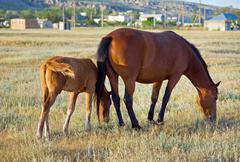Horses on meadow Stock Photos