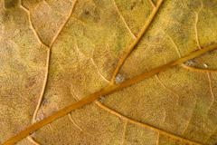 beautiful leaf fallen leaf nature - stock photo