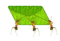 Ant messenger Stock Illustration