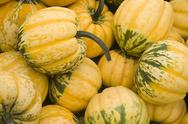 Stock Photo of gourds in a box on the farm