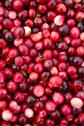 Stock Photo of cranberries