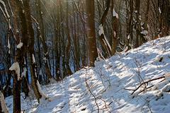 Talvi metsässä 4 Kuvituskuvat