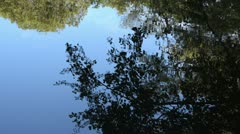 Water reflection of a leafy branch Stock Footage