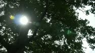 Sunlight through branches of ginkgo tree trunk leaves. Stock Footage