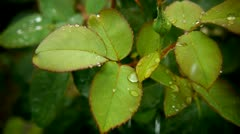 water of green leafs.mp4 - stock footage
