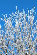 Ice and snow tree close up. Stock Photos