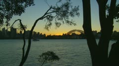 Silhouette trees, Sydney city background Stock Footage