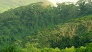 Hillside of Pohnpei Stock Footage