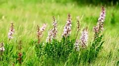 Wild flowers - stock footage
