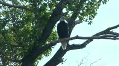 20July Scenics 02 - Eagle Stock Footage