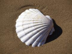 shell in the sea - stock photo