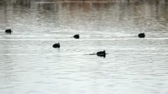Birds Moving On The Water Stock Footage