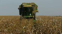 Cotton picking 6 Stock Footage