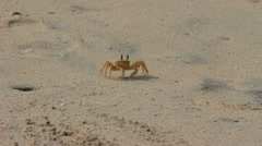 shy crab on the beach - stock footage