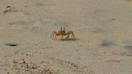 Stock Video Footage of shy crab on the beach