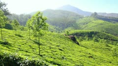 Mountain tea plantation in Munnar Kerala India Stock Footage