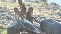 Wet monkey Stock Footage