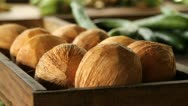 Fresh Coconuts Stock Footage