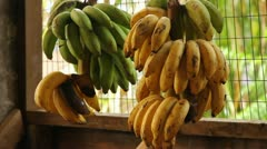 Stock Video Footage of Hanging Bananas