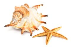 starfish and seashell isolated from white - stock photo