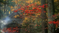Buddhist Temple in the fall. Stock Footage