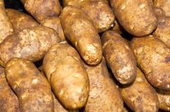 russet or baking potatoes on display - stock photo