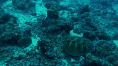 Swimming with green turtle1-Apple ProRes 422 (HQ) Stock Footage