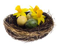 birds nest with dyed colorful eggs and flowers - stock photo