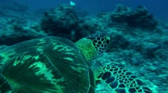 Swimming with green turtle 2-Apple ProRes 422 (HQ) Stock Footage