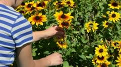 Woman hands cut pick  rudbeckia flower scissors clipper garden Stock Footage