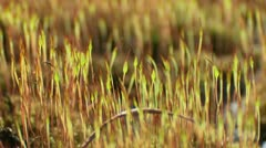 Macro grass Stock Footage