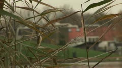Weeds and houses, Griftpark, Utrecht  Stock Footage