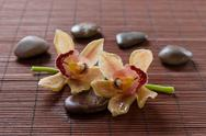 Stock Photo of flower orchid