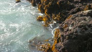 Kelp and rocks Stock Footage