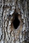 Bird house, bark of tree with a hollow Stock Photos