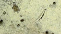 Bioluminescent cave dwelling fungus gnat larva Stock Footage
