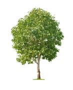 Stock Photo of tree on white background