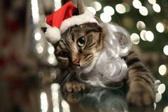 Christmas Cat.JPG - stock photo