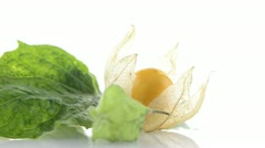 Physalis fruit Stock Footage