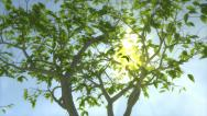 Growing tree with sunny background Stock Footage