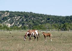 Mother and child horses eating on a meadow Stock Photos