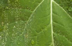 wet leaf detail - stock photo