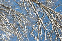 Stock Photo of branches with snow