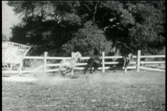 Three horses running in corral Stock Footage