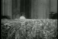 Man's hat protruding as he moves behind bale of hay Stock Footage